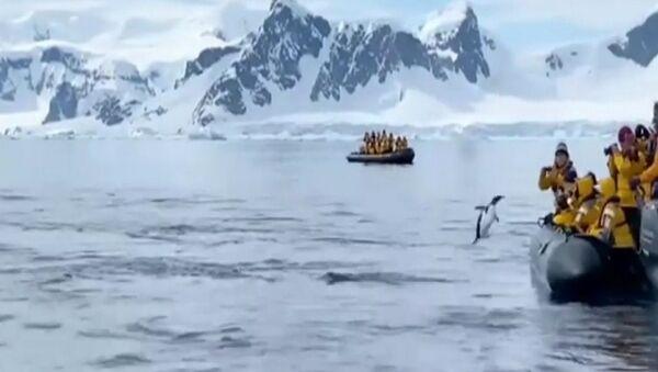 Il pinguino è saltato sulla barca - Sputnik Italia