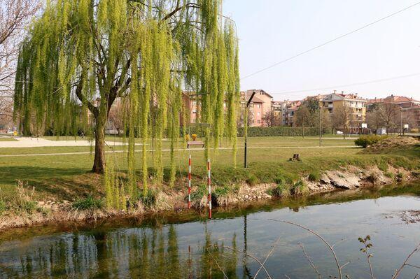 Un albero e un laghetto in un parco - Sputnik Italia