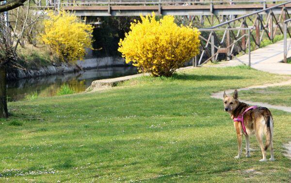 Un cane in un parco di Milano - Sputnik Italia