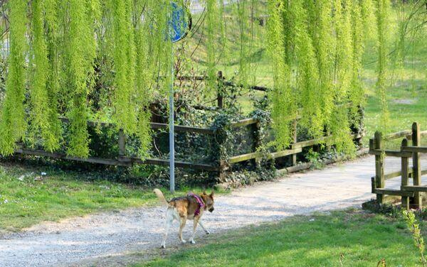 Un cane in un parco  - Sputnik Italia