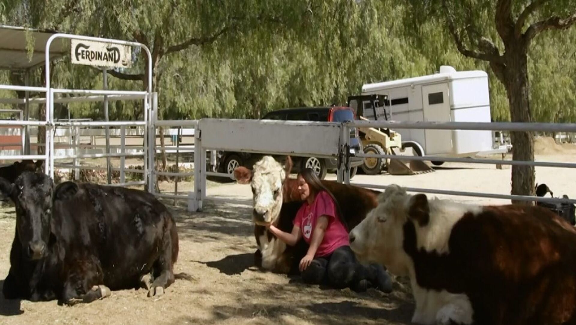 La fattoria della California offre una terapia per migliorare l'umore con abbracci di mucca - Sputnik Italia, 1920, 27.03.2021