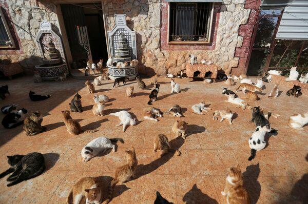 Santuario per gatti di Ernesto a Idlib, Siria, il 28 marzo 2021 - Sputnik Italia