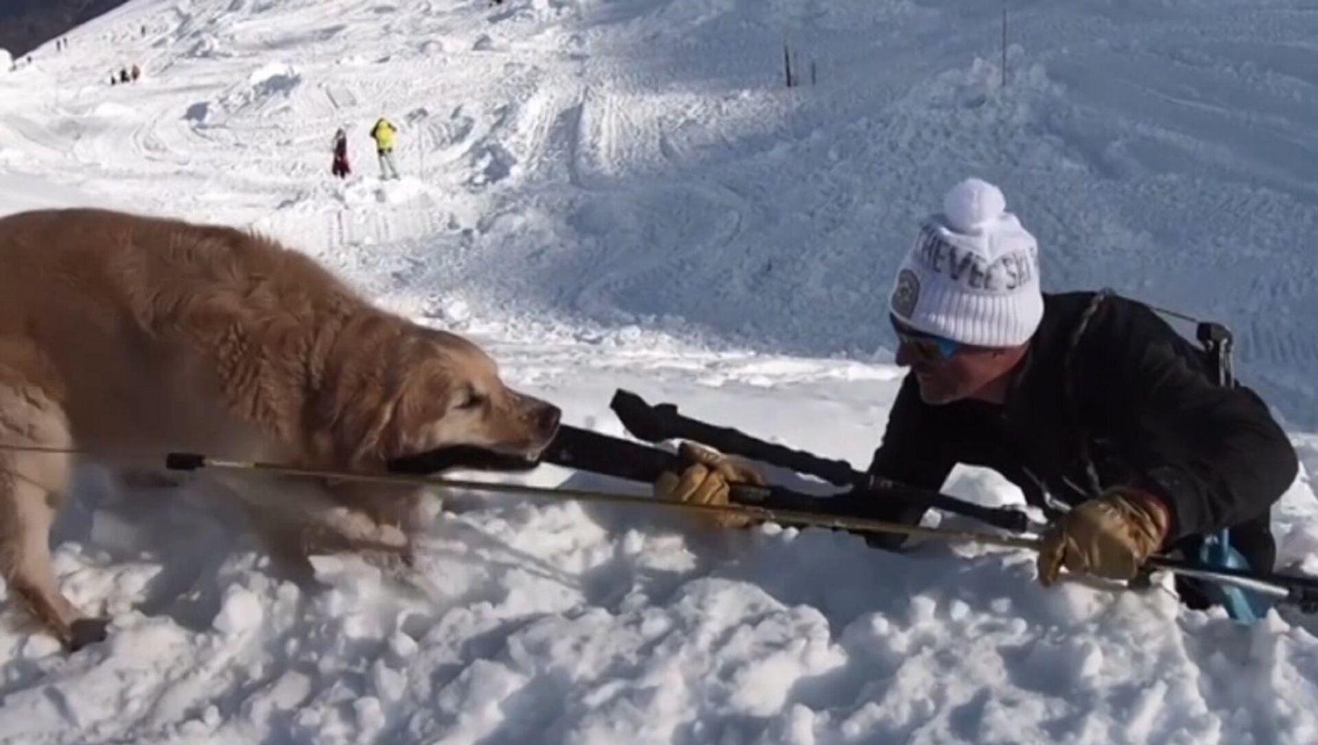 Esperimento, blogger di YouTube sepolto in una grotta di neve e salvato da un cane - Sputnik Italia, 1920, 05.04.2021