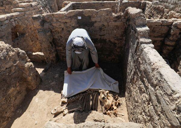 Un uomo guarda i resti scheletrici di animali alla Città d'oro perduta'', che è stata recentemente scoperta dagli archeologi, il 10 aprile 2021 - Sputnik Italia