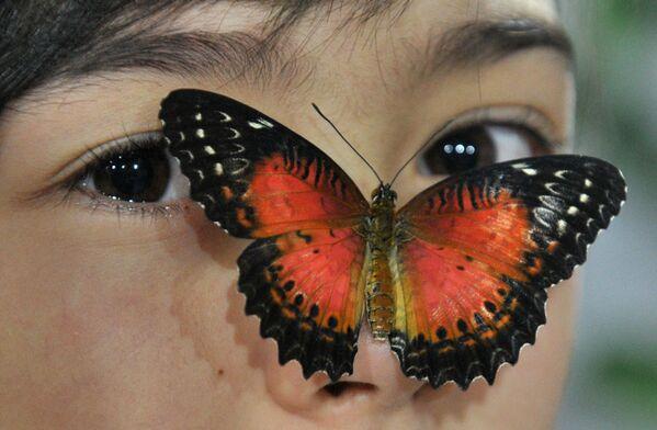 Una farfalla sul viso di una ragazza durante una mostra di farfalle a Bishkek, il 9 gennaio 2015 - Sputnik Italia