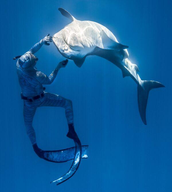 L'apneista francese Pierrick Seybald nuota con uno squalo nelle acque della Vallée Blanche, a nord di Tahiti, il 2 ottobre 2019 - Sputnik Italia