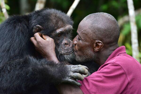 «Ponso, lo scimpanzé più solo del mondo» è uno scimpanzé che ha vissuto per tre anni su una piccola isola in Africa, completamente da solo - Sputnik Italia
