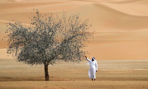 Un uomo accanto a un albero nel Santuario dell'Orice d'Arabia a Umm Al-Zamool, negli Emirati Arabi Uniti, a circa 290 chilometri a sud di Abu Dhabi, vicino al confine con l'Oman e l'Arabia Saudita  - Sputnik Italia