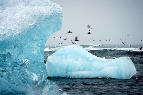 Una foto mostra i gabbiani che volano intorno agli iceberg nella laguna glaciale di Jokulsarlon in Islanda, il 13 aprile 2017 - Sputnik Italia