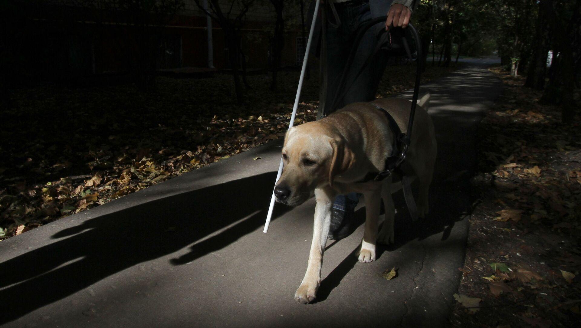 Non vedente con un cane - Sputnik Italia, 1920, 10.05.2021