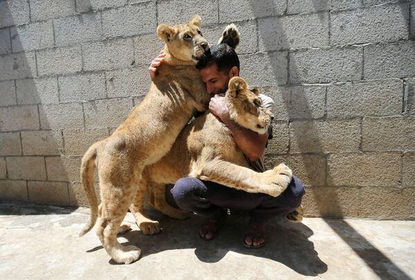 Un uomo palestinese gioca con i cuccioli di leone a Khan Younis, nel sud della Striscia di Gaza, il 23 maggio 2021. - Sputnik Italia