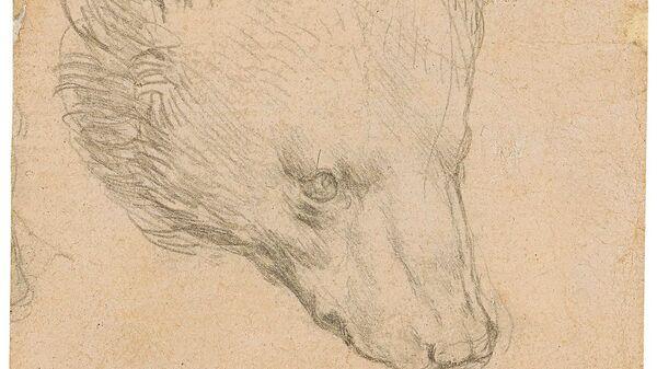 Рисунок Леонардо да Винчи Голова медведя - Sputnik Italia