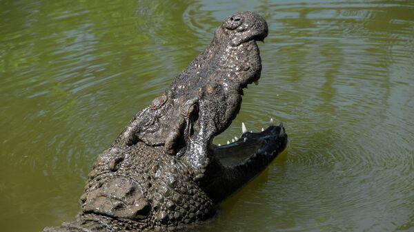 Морда крокодила с открытой пастью - Sputnik Italia