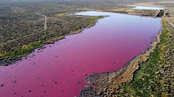 Una laguna che è diventata rosa a causa di una sostanza chimica utilizzata per aiutare la conservazione dei gamberetti nelle fabbriche di pesca vicino a Trelew, Argentina, 23 luglio 2021. - Sputnik Italia