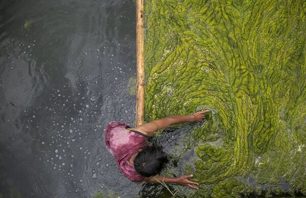 Un lavoratore nepalese pulisce le alghe nello stagno Kamal Pokhari a Kathmandu, Nepal, 27 luglio 2021. - Sputnik Italia