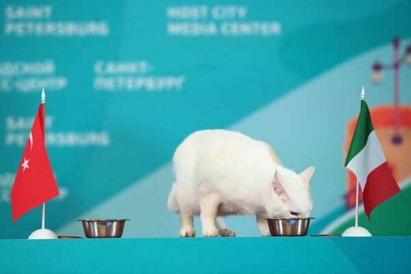 Il gatto Achille pronostica l'esito di una partita degli Europei tra Turchia e Italia. - Sputnik Italia