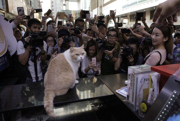 """Fotografi scattano foto del gatto """"Brother Cream"""" in un minimarket durante l'ultimo giorno lavorativo del negozio a Hong Kong, 25 maggio 2016. - Sputnik Italia"""