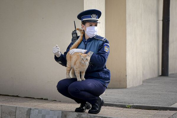 Un agente di polizia gioca con un gatto a Bucarest, Romania, 12 aprile 2020. - Sputnik Italia
