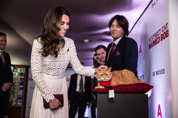 La duchessa di Cambridge, Kate Middleton, saluta il gatto Bob, protagonista del film Un gatto di strada di nome Bob, alla premiere del film a Londra, 3 novembre 2016.  - Sputnik Italia