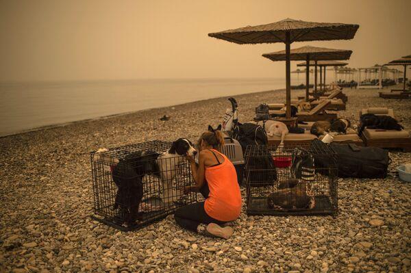 Una donna si prende cura di un cane ferito dalle fiamme su una spiaggia, durante un incendio nel villaggio di Pefki, sull'isola di Evia, Grecia, il 9 agosto 2021 - Sputnik Italia
