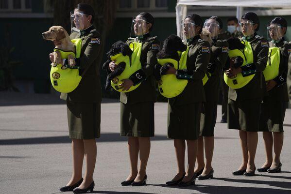 Gli agenti di polizia con i cuccioli di golden retriever da addestrare come cani poliziotto durante una cerimonia presso l'Accademia Nazionale di Polizia a La Paz, in Bolivia, lunedì 16 agosto 2021 - Sputnik Italia