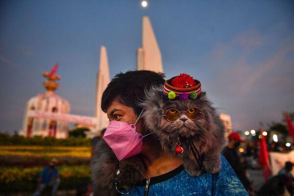 Un gatto riposa sulle spalle di un dimostrante durante una manifestazione per chiedere le dimissioni del primo ministro thailandese Prayut Chan-O-Cha accusato nella cattiva gestione della pandemia, Bangkok, il 18 agosto 2021. - Sputnik Italia