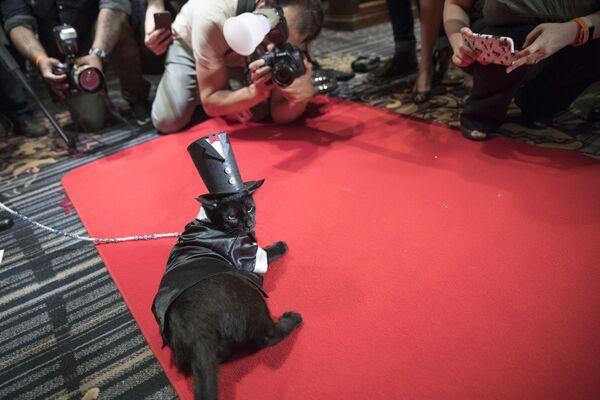 Un gatto di nome Merlino, vestito con uno smoking e un cappello a cilindro degli anni '20 sul tappeto rosso durante la sfilata di moda per gatti all'Algonquin Hotel di New York, il 2 agosto 2018. - Sputnik Italia