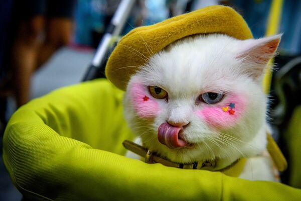 Un gatto truccato partecipa alla mostra di Pet Expo Thailand 2020, Bangkok, Thailandia il 5 settembre 2020.  - Sputnik Italia