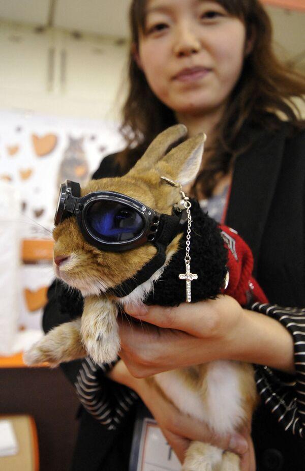 Una proprietaria mostra il suo coniglio in costume e occhiali da sole durante un concorso di moda per conigli alla Festa del Coniglio nella città di Yokohama nella prefettura di Kanagawa, periferia di Tokyo, il 15 novembre 2009.  - Sputnik Italia