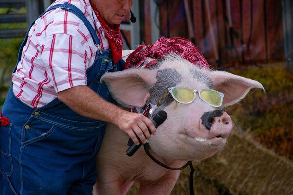 """Un contadino dà a un maiale un microfono """"per cantare"""" nel palco dello spettacolo comico The Pork Chop Revue a Louisville, Kentucky, Stati Uniti. - Sputnik Italia"""