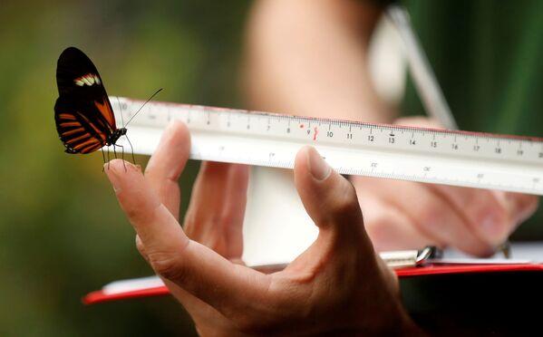 Alcune delle creature più piccole, come le farfalle, richiedono l'uso di attrezzature extra sensibili per rilevare parametri accurati. - Sputnik Italia