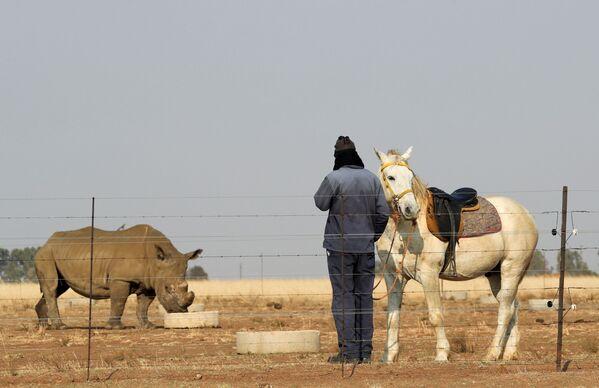 Peter, un lavoratore, è accanto al suo cavallo, mentre osserva un rinoceronte al Buffalo Dream Ranch. - Sputnik Italia