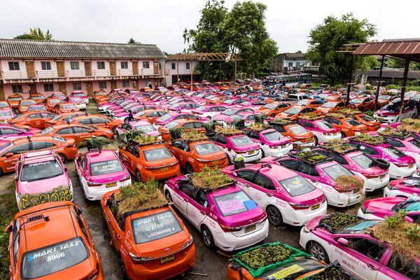 Orti piantati sui tetti dei veicoli di un'azienda di taxi, le cui auto sono attualmente fuori servizio a causa della crisi degli affari per colpa della pandemia di coronavirus, a Bangkok. - Sputnik Italia