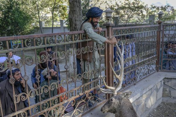 Un combattente talebano* tocca un cervo nel suo recinto allo zoo di Kabul, il 17 settembre 2021.*Organizzazione terroristica estremista illegale in Russia e in molte altre nazioni. - Sputnik Italia