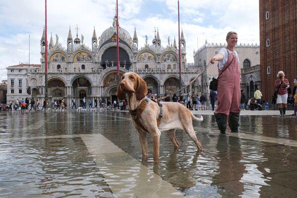 La prima acqua alta d'autunno ha bagnato il pavimento della basilica di San Marco di Venezia - 5 Ottobre 2021. - Sputnik Italia