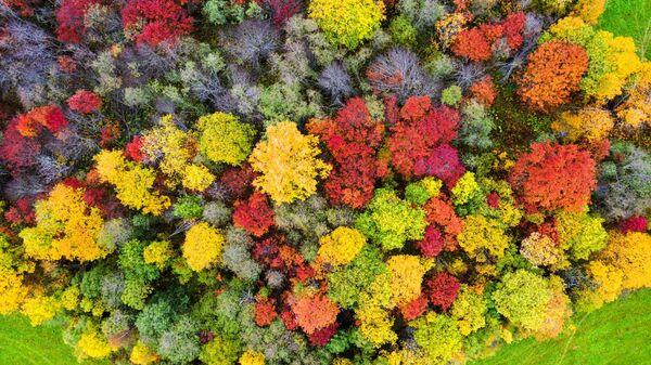Foresta e campi durante la stagione autunnale nella Repubblica di Carelia, in Russia. - Sputnik Italia
