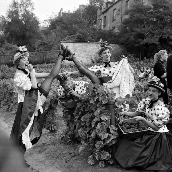 Le ballerine del Moulin Rouge partecipano alla vendemmia di Montmartre a Parigi - 2 ottobre 1953. - Sputnik Italia