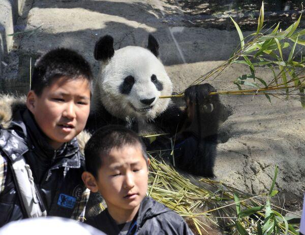 Alcuni ragazzi giapponesi sorridono davanti al recinto di Shin Shin, una femmina di panda gigante intenta a rosicchiare bambù allo zoo Ueno di Tokyo - 1° aprile 2011.  - Sputnik Italia