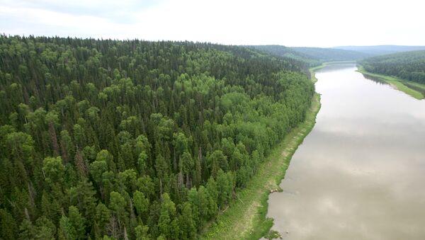 La tundra siberiana lungo il corso del fiume Enisey. - Sputnik Italia