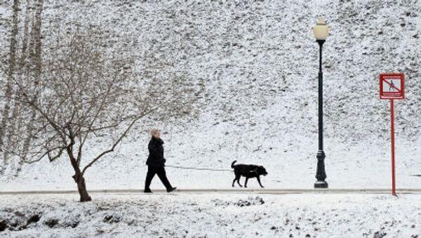 Un passante porta a spasso il suo cane nel parco del monastero di Novodevichy a Mosca - Sputnik Italia