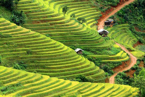 Le risaie in Vietnam. - Sputnik Italia