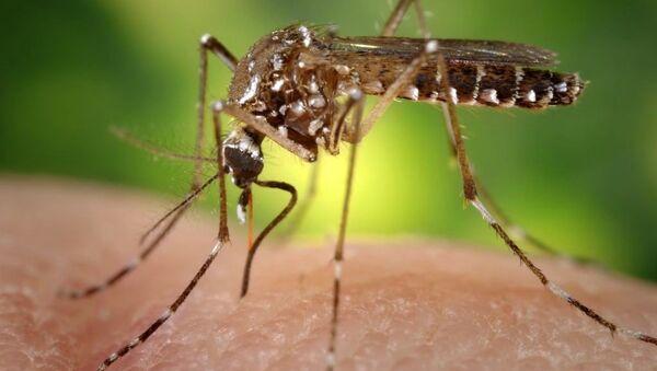 Mosquito bite - Sputnik Italia