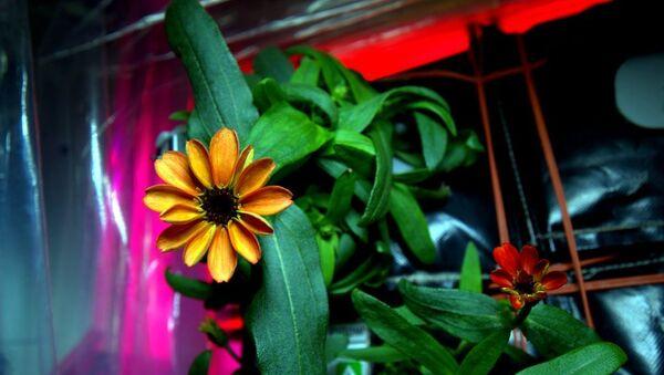 Space Flower - Sputnik Italia