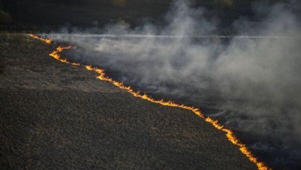 Incendio del bosco in Ucraina - Sputnik Italia