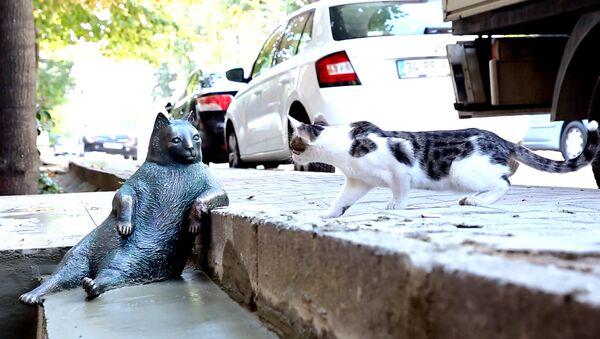 Il monumento al gatto Tombili in Turchia. - Sputnik Italia