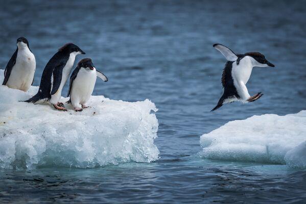 Il fascino dell'Antartide. - Sputnik Italia