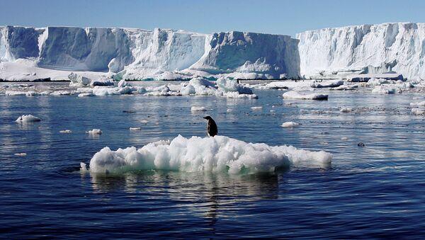Пингвин Адели на льдине в Антарктиде - Sputnik Italia