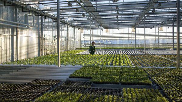 Greenhouse complex - Sputnik Italia