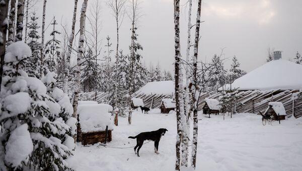 Питомник ездовых собак в Карелии - Sputnik Italia