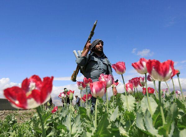 Un poliziotto afgano nella provincia di Jalalabad. - Sputnik Italia